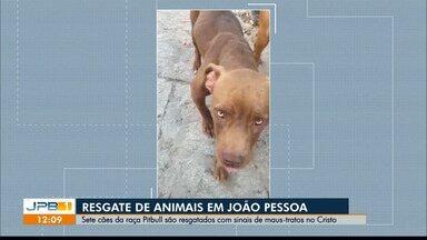 Cães da raça pitbull são resgatados pela PM em casa usada como 'rinha' em João Pessoa - Sete cachorros foram resgatados abandonados, com fome e sede. Vizinhos contaram que ninguém esteve na residência por pelo menos 20 dias.