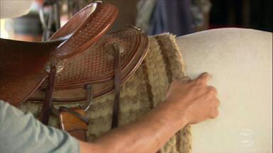 Aprenda como colocar a manta e a sela para evitar ferimentos nos cavalos - Veterinário explica como colocar o conjunto corretamente para não machucar o animal.