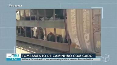 Caminhão com 67 bois tomba em rodovia estadual em Monte Alegre - Acidente aconteceu na tarde desta segunda-feira (7).