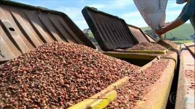 Trigo pode ter a maior área plantada dos últimos 7 anos no Rio Grande do Sul - A expectativa é de que a safra seja 40% maior do que no ano anterior.