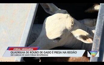 Quadrilha de roubo de gado é presa na região; 500 animais foram recuperados - Confira a reportagem exibida pelo Jornal Vanguarda.