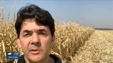 Produtor rural de Dourados e pres. Assoc. Produtores de Mel falam sobre estréia do + Agro - MS1