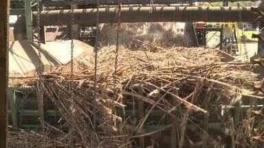 Quinze usinas em Alagoas se preparam para início da moagem da cana-de-açúcar - Setor está otimista com a permissão de venda de etanol direto para os postos de combustíveis.