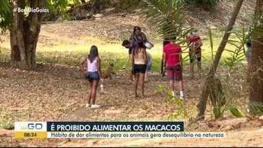 Alimentar animais provoca desequilíbrio no meio ambiente, em Goiânia - Pessoas alimentam os macacos sem poder.