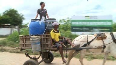 Agricultores se preocupam com fenômeno da seca verde - Apesar da lavoura verde, açudes e cisterna continuam vazios em Alagoas.