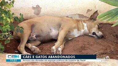 Cães e gatos estão sendo abandonados em locais públicos de Juazeiro do Norte - Confira mais notícias em g1.globo.com/ce