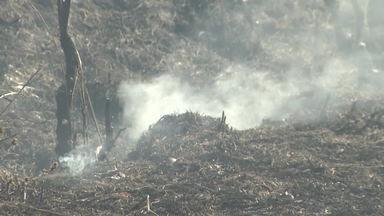Homem é preso após colocar fogo em mata no Morro da Usipa - De acordo com a Polícia Militar de Meio Ambiente, o incêndio é de grandes proporções e havia consumido cerca de 5 hectares.
