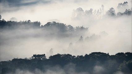 Invasão de javalis destrói a agricultura na Serra da Mantiqueira