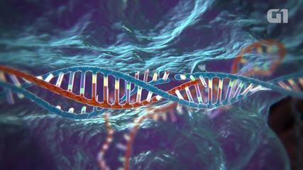 Entenda o que é o Crispr: técnica descoberta em 2013 que permite que cientistas mudem parte do código genético de uma célula