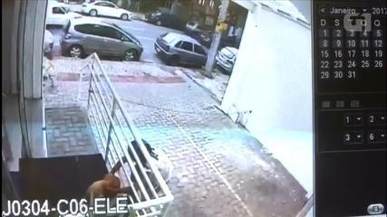 Cadela é furtada em farmácia da Região Centro-Sul de Belo Horizonte