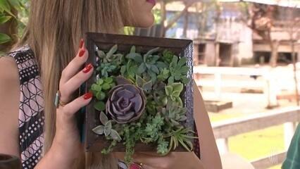 Aprenda a fazer um jardim de suculentas