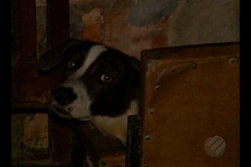 Família se muda e deixa cão trancado há dois meses em casa na Cabanagem, em Belém