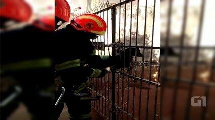 Bombeiros resgatam cachorro preso na grade de portão em Itápolis