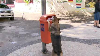 Cadela Kika recolhe lixo nas ruas de Copacabana