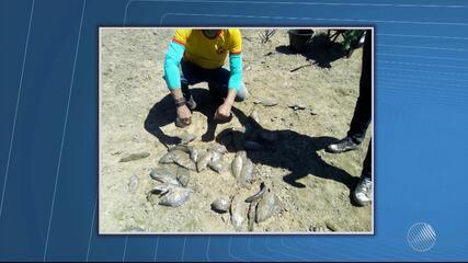 Peixes são resgatados de lagoas com pouca água em Xique-Xique
