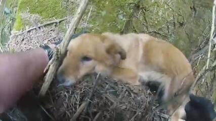 Bombeiros resgatam cadela que caiu de penhasco