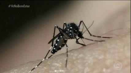 Pernilongo comum pode transmitir vírus da zika