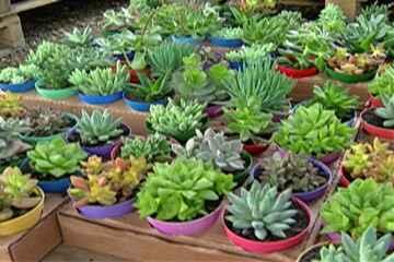 Com crise, Expoá é substituída por feira de flores menor em Poá