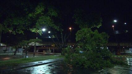 Chuva derruba árvores na Região Metropolitana de Belo Horizonte