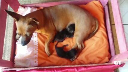Cadela surpreendeu dona depois que 'adotou' os gatinhos
