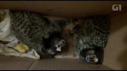 Homens são presos com animais silvestres na Zona Leste de São Paulo