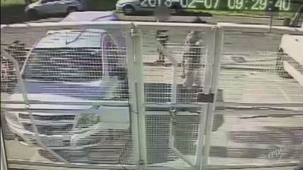 Ajudante furta celular em empresa que entregaria currículo em Santa Bárbara D'Oeste