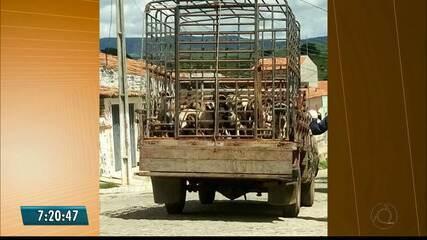 Moradores de Igaracy denunciam que prefeitura realizou sacrifício de cães