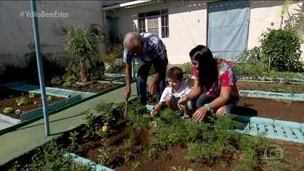 Família cultiva PANCs na horta de casa