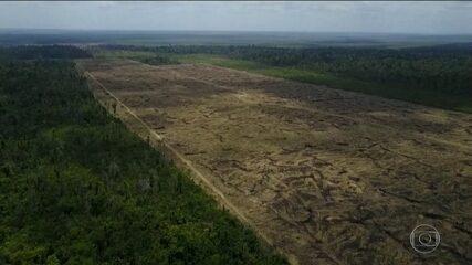 Imazon afirma que desmatamento na Amazônia aumentou 40% nos últimos 12 meses