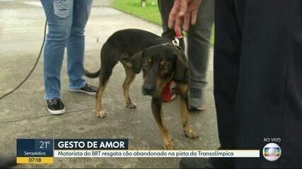 Motorista de BRT pára ônibus e resgata cão abandonado na pista da Transolímpica