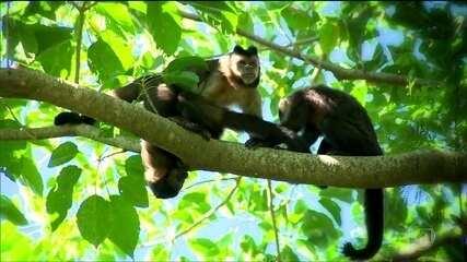 Vírus da Zika é encontrado em macacos no Brasil