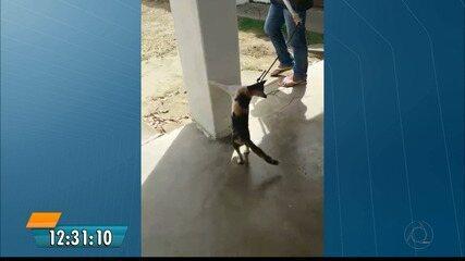 Maus-tratos a um gato em Itabaiana repercute nas redes e gera revolta