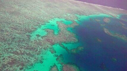 Fant 360: conheça a grande barreira de corais da Austrália