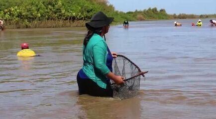Marisqueiras do Piauí desenvolvem pó de conchas usado na agricultura