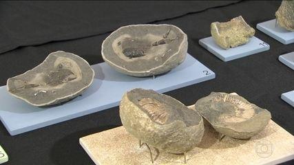 Museu Nacional inaugura primeira exposição depois do incêndio