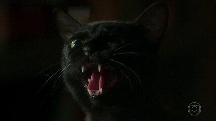 León ameaça atacar Luz para defender segredo dos guardiães