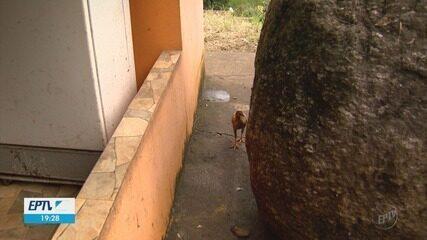 Pedra desliza 30 metros e por pouco não atinge residência na zona rural de Ipuiúna (MG)