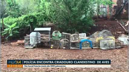 Polícia encontra criadouro clandestino de aves em Capanema