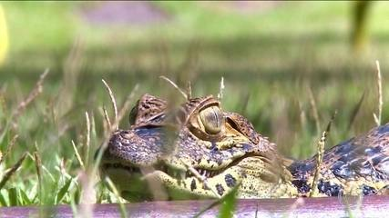 Onda de calor no Sudeste afeta fauna nas áreas urbanas de Vitória