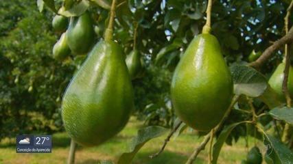 Reportagem especial destaca benefícios do abacate