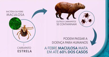 Febre maculosa pode matar em até 60% dos casos