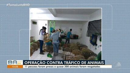 Operação contra o tráfico de animais prende 11 pessoas no norte do estado