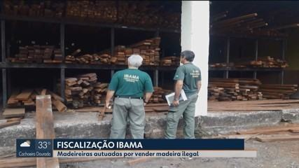 Ibama divulga resultado de operação realizada em madeireiras do Triângulo e Alto Paranaíba