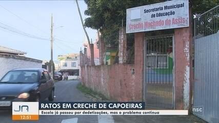 Infestação de ratos em creche preocupa professores e pais em Florianópolis