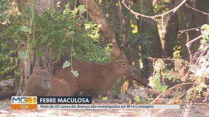 Belo Horizonte e Contagem investigam mais de 60 casos suspeitos de febre maculosa
