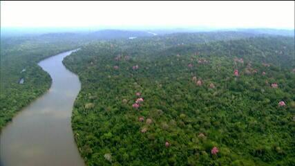 Alemanha e Noruega estão insatisfeitas com mudanças no Fundo de Preservação da Amazônia