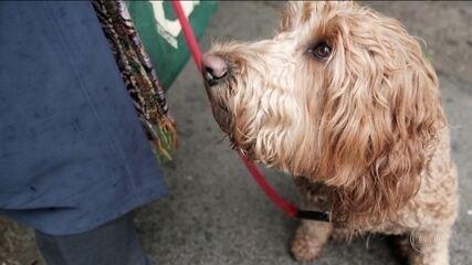 Cientistas desvendam truque dos cães para chantagear donos com olhar irresistível
