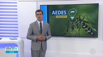 Bahia tem aumento no número de casos de dengue