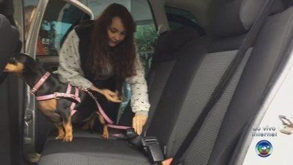 TEM Notícias mostra maneira correta de transportar animais durante viagens