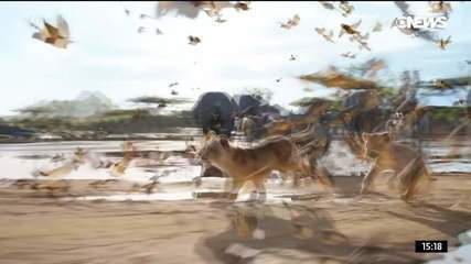 Novo 'O Rei Leão' tem narrativa quase idêntica à do original